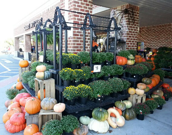 Display of plants, pumpkins, and squash outside a grocery store