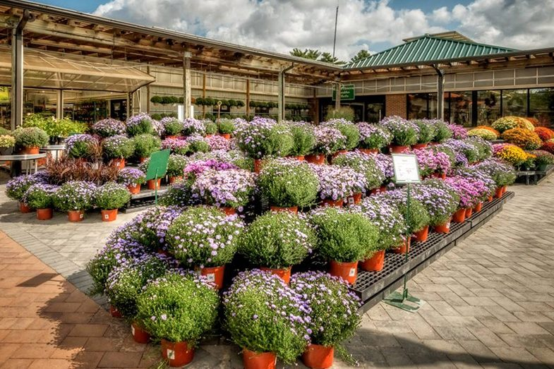 Outdoors live goods displays