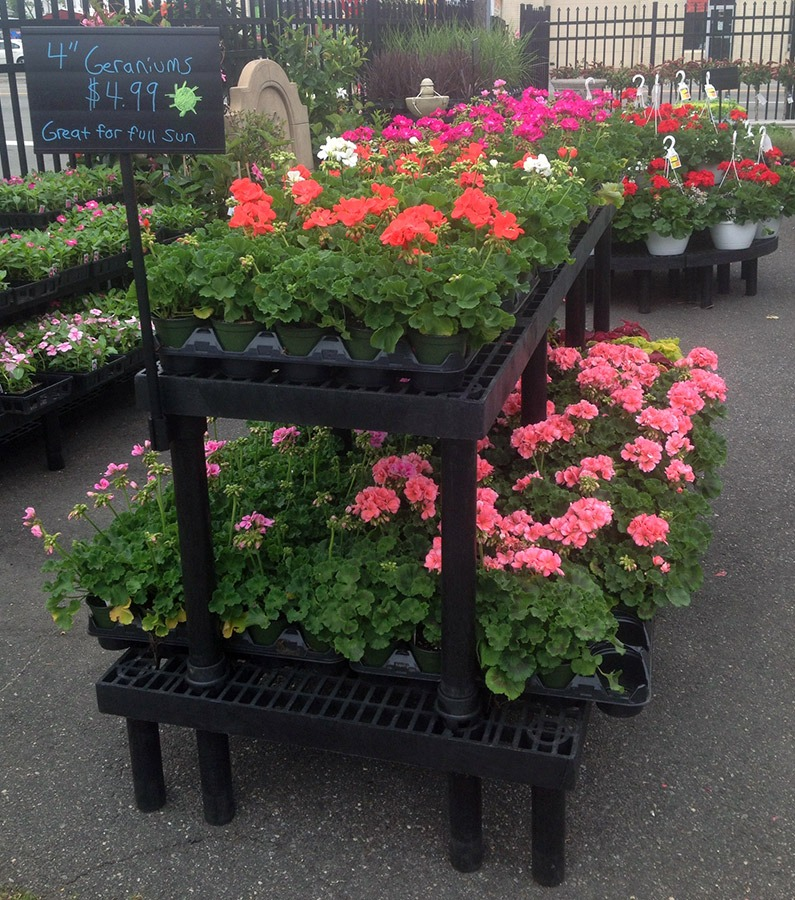 plants on plastic display tables at a nursery
