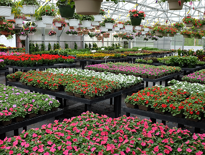 Displays of flowers in a green house.