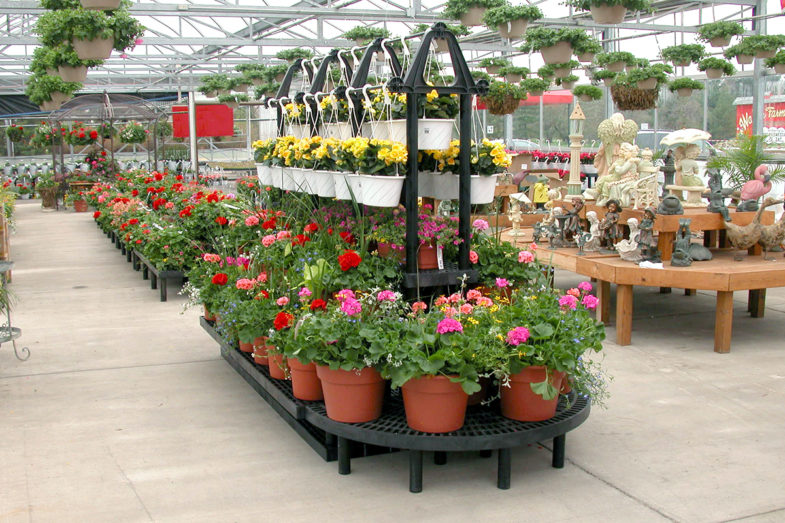 Display of potted plants inside a greenhouse.
