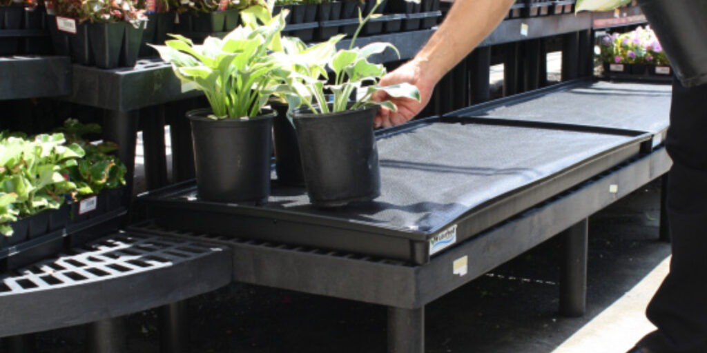 plant paced on a waterbed tray